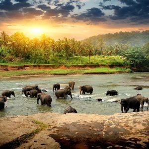 Reizen in Sri Lanka