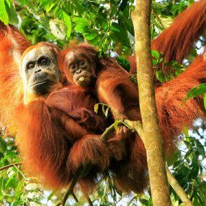 Sumatra Reizen