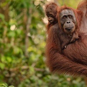 Rondreis Sumatra