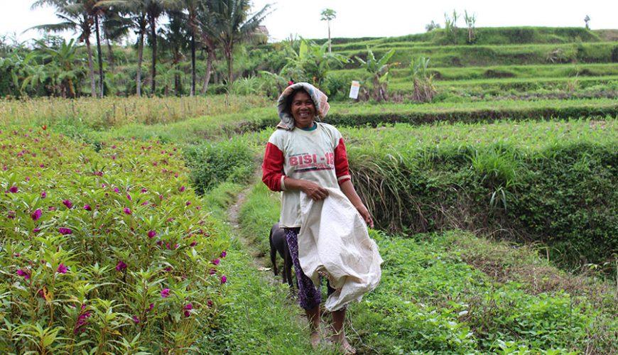 Jongerenreis Java en Bali